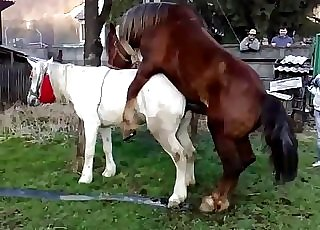 Two magnificent horses enjoying their natural call