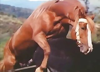 Muscled chocolate-colored stallion is screwing a horse
