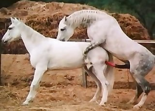 Two milky horses fucking outdoors