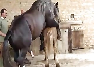 Two horses having nice sex in doggy posture