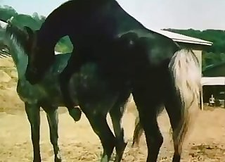 Sexy zoo flick with a hung horse