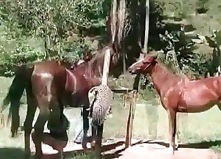 Horses enjoying hardcore sex in the open
